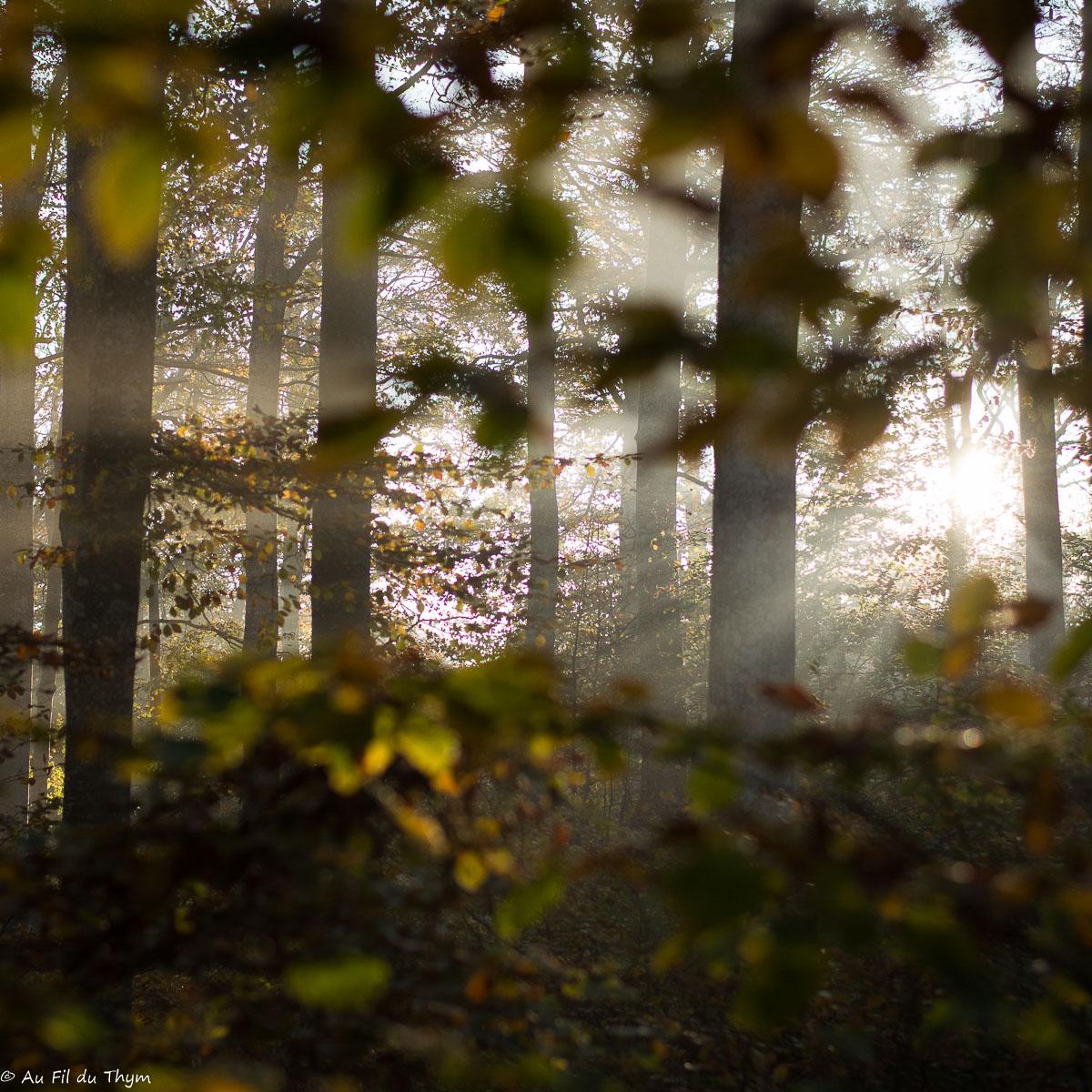 Une balade en forêt