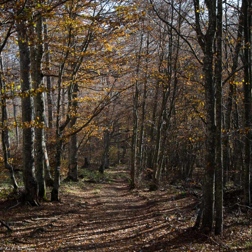 Randonnée en Forêt Grand Echaillon - Automne 2018