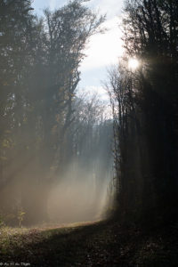 petits plaisirs nature d'automne : balades dans l'air frais du matin