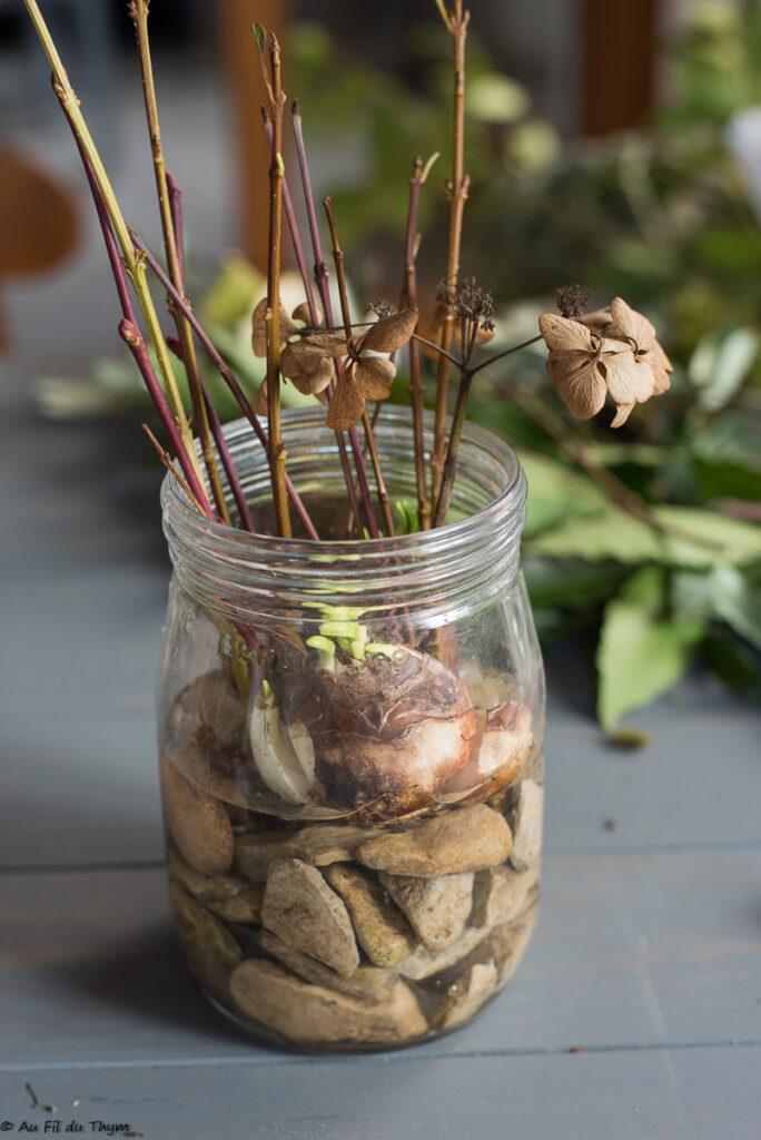 Astuces pour forcer bulbes pour les fêtes // Idée de composition