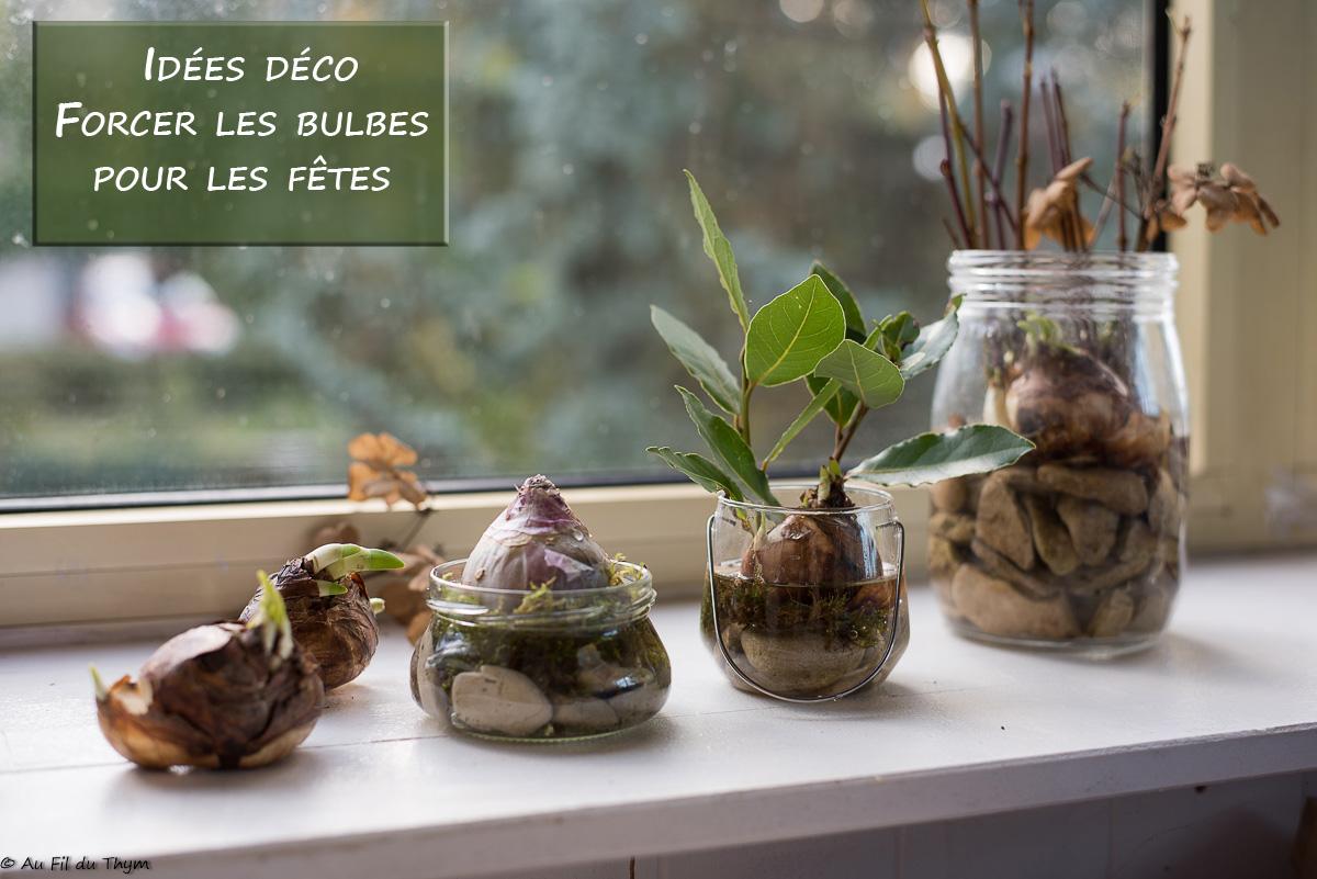 Forcer les bulbes pour les fêtes : Astuces et idées déco