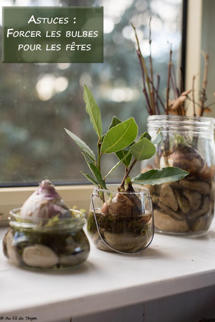 Astuces pour forcer bulbes pour les fêtes // Idées décoration intérieur pour l'hiver