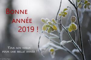 Bonne année 2019 - Au Fil du Thym - Blog Nature