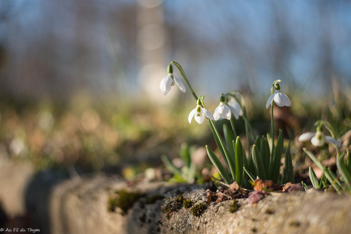Idées pour un jardin ou un balcon fleuri en fin d'hiver