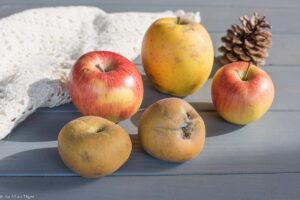 petits plaisirs nature d'automne : les pommes
