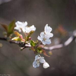idées écolos mars 2020 : Laisser pousser les arbres !