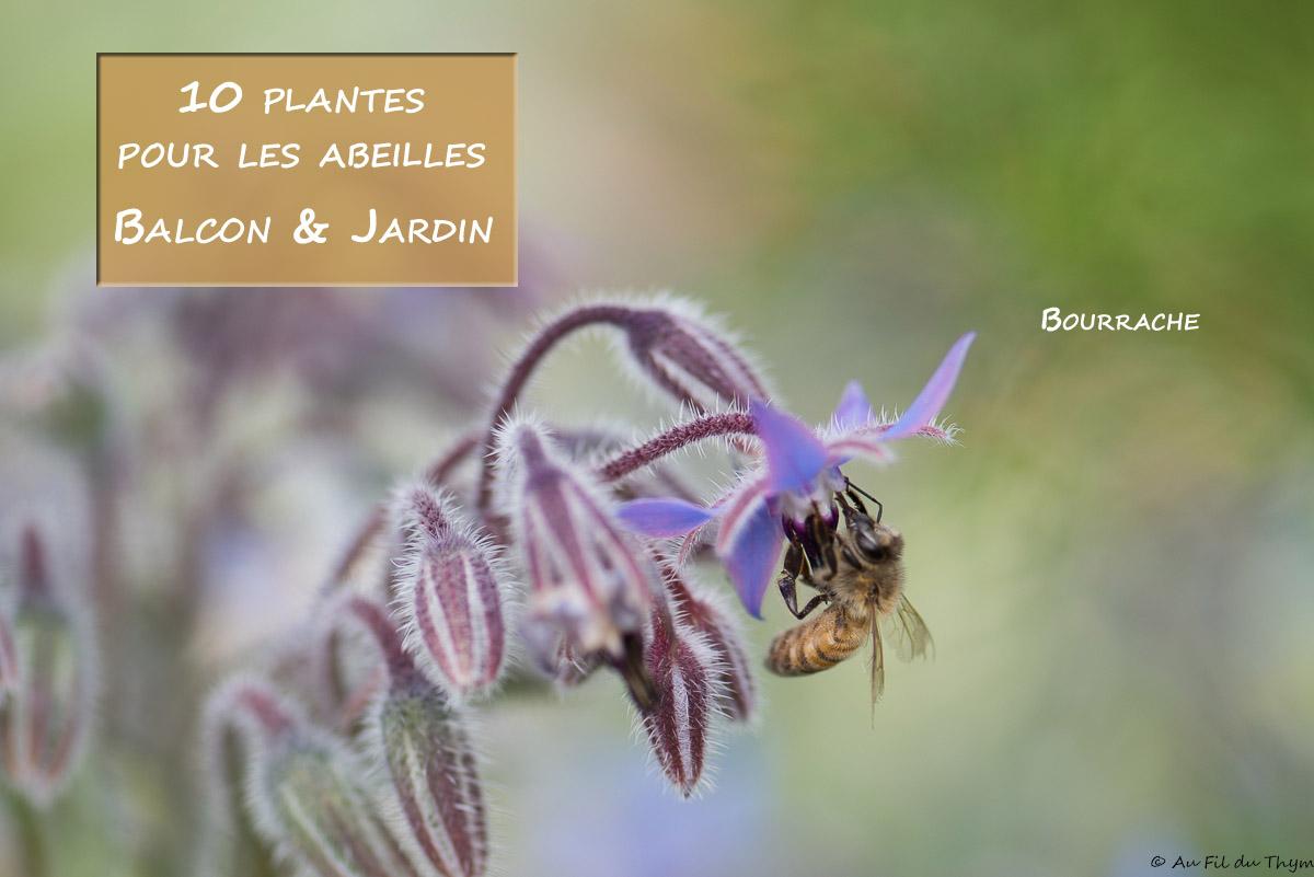 Plantes Pour Talus Sec 10 idées de plantes pour les abeilles (balcon, terrasse