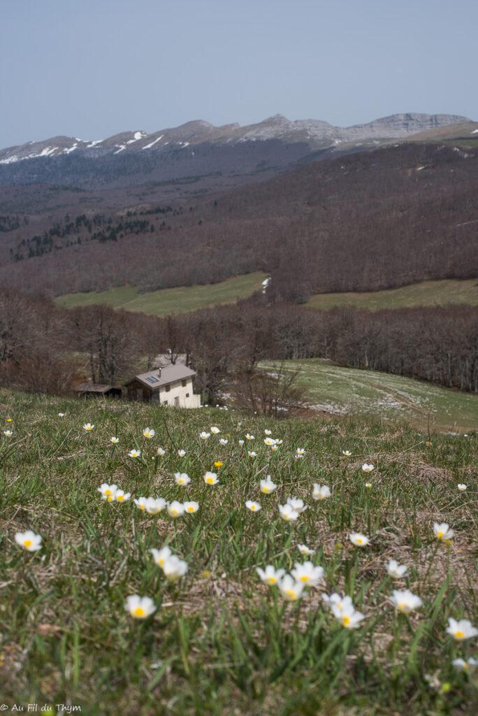 Plateau d'Ambel - vercors avril 2019