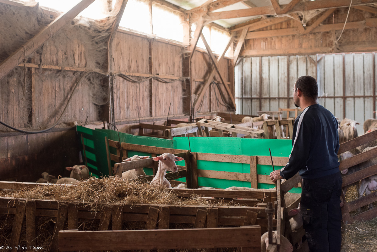 Vis ma vie d'exploitant bio : Sylvain, Éleveur-Fromager à la ferme de Routes (Bésayes)