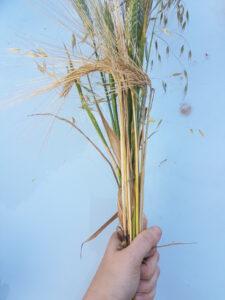 tutoriel bouquets blés et céréales pour l'été