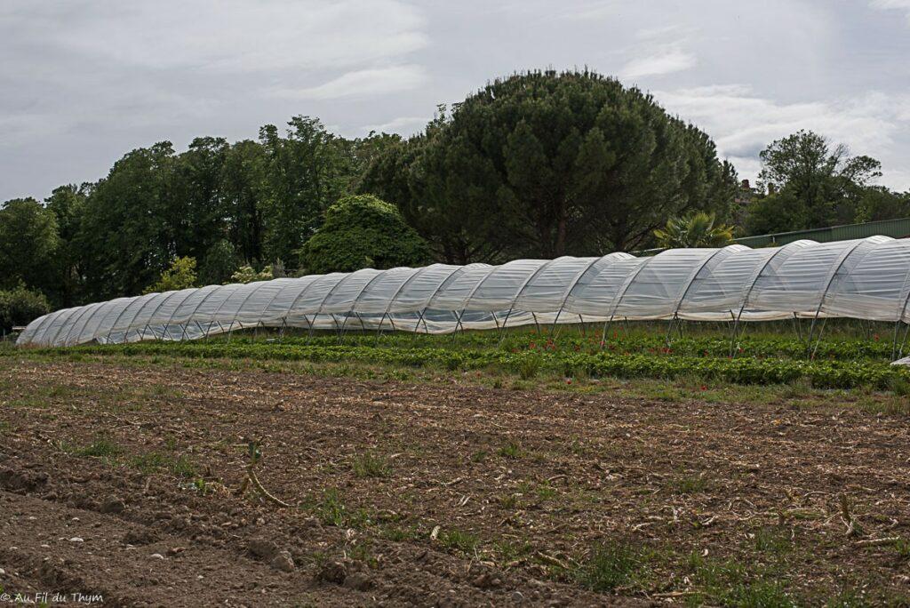 Exploitation bio maraîcher : Serres de fraises et fraises de plein champ