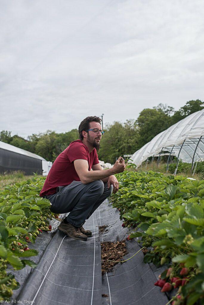 Exploitation bio maraîcher : fraises de plein champ