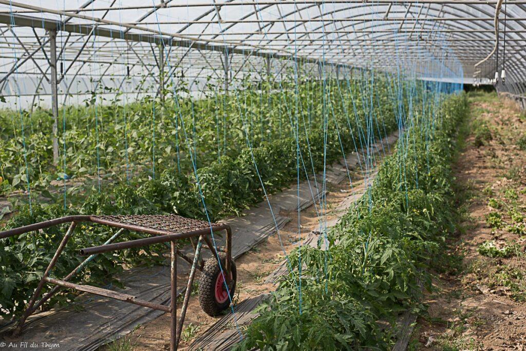 Exploitation bio maraîcher : Serres de tomates