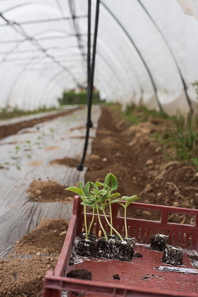 Exploitation bio maraîcher : jeunes plants