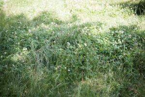 Idées écolos juillet 2019 : Laisser sa pelouse se transformer en prairie