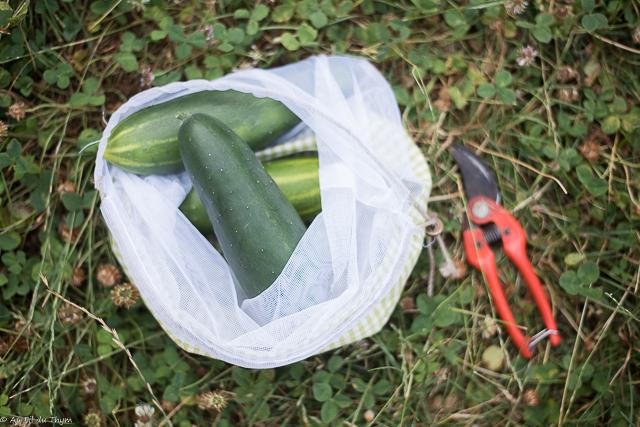 Idées écolos août : partager ses récoltes potagères