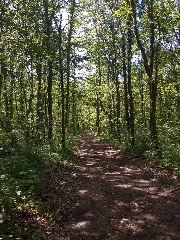 Randonnée pas du loup - Combe d'Oyans - Drôme