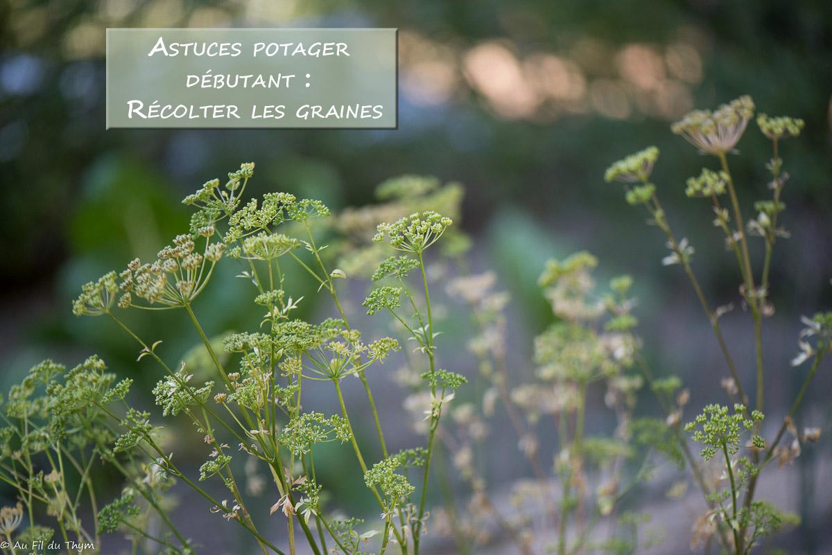 Potager débutant #4 : Récolter les graines et les conserver