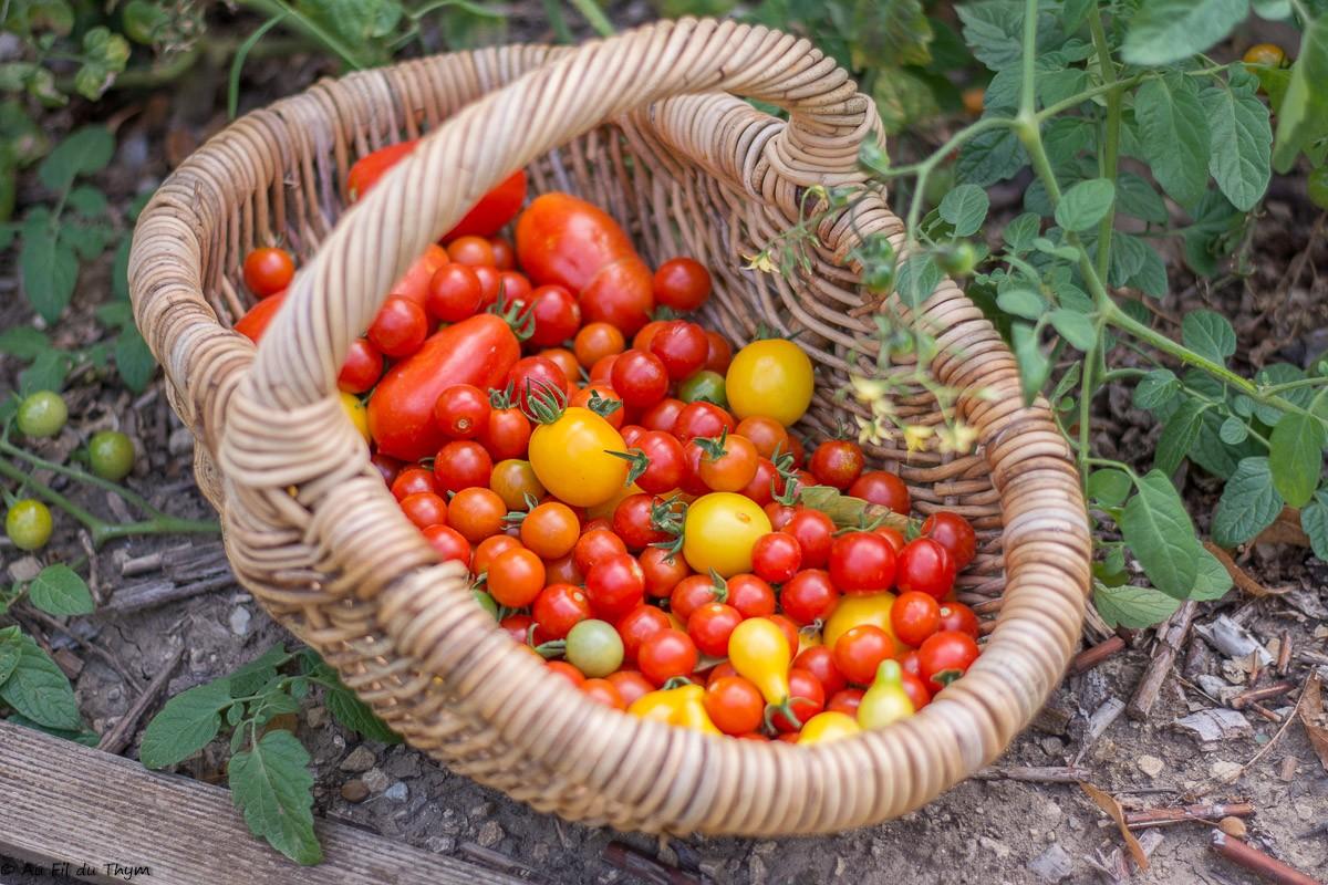 Récolte du jardin