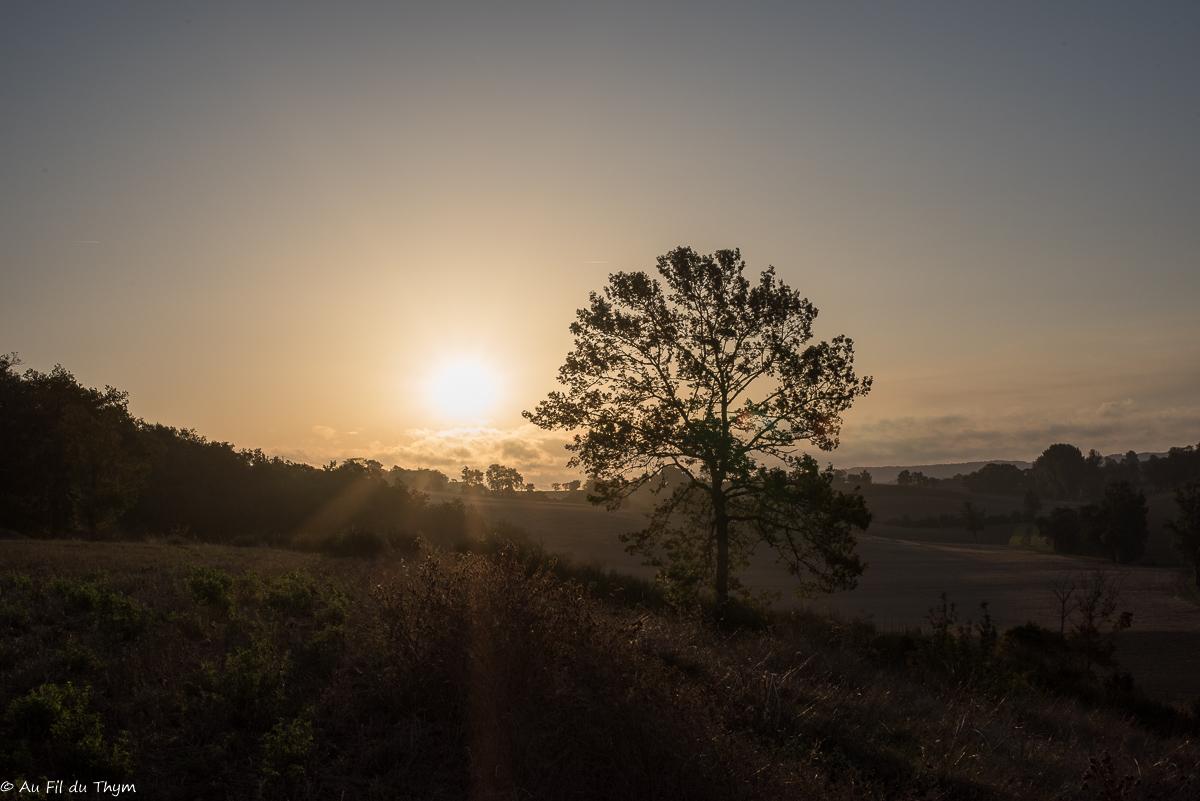 Lever de soleil gerseois (Gers, Savès)