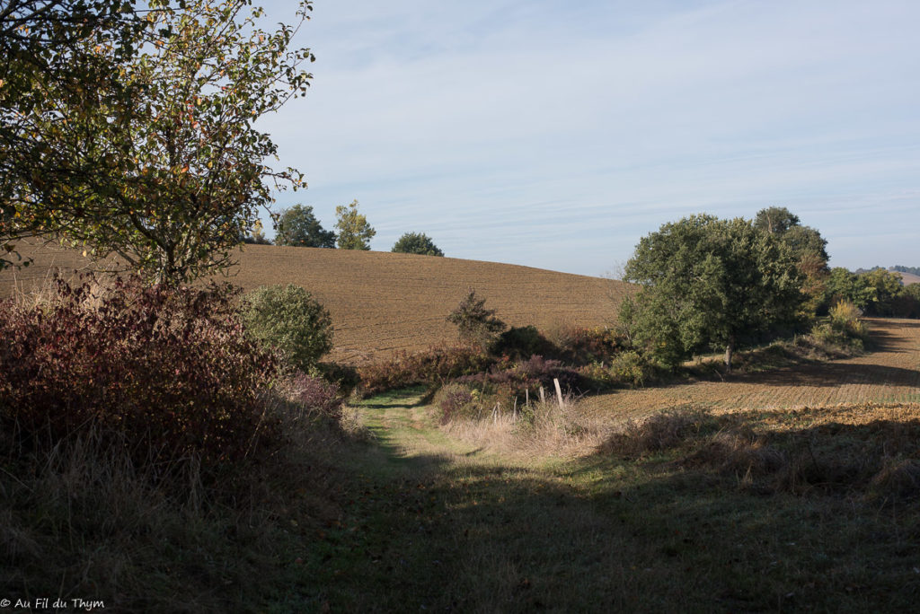 Ecole buissonière de Polastron - Chemin de promenade (automne 2019)