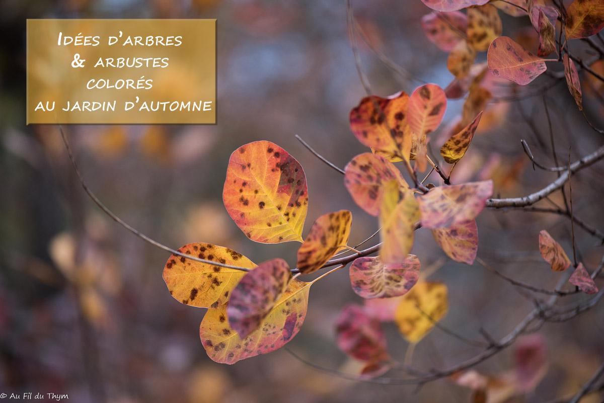 5 idées d'arbres / arbustes colorés au jardin d'automne