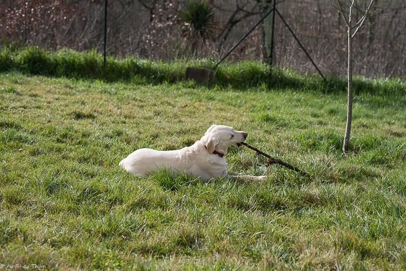 adopter animal abandonné : petites manies