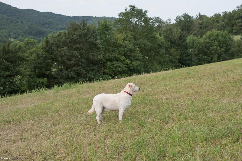 adopter animal abandonné : Balades au grand air