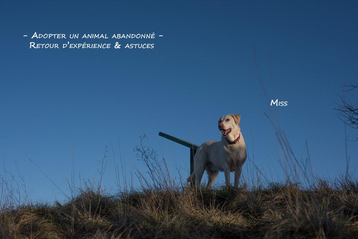 L'adoption d'un animal abandonné : bilan et astuces