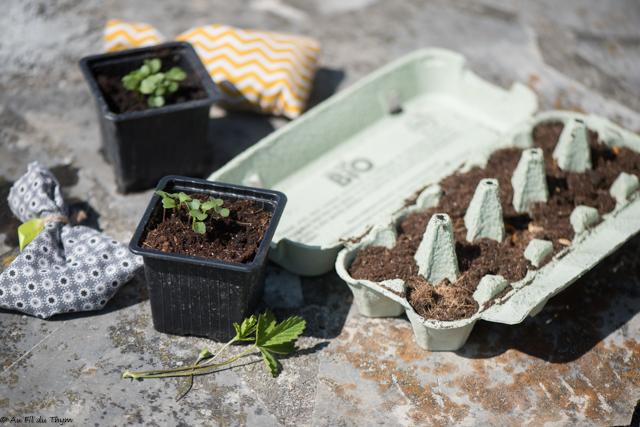 8 idées de fleurs à semer pour balcons, terrasses et jardins