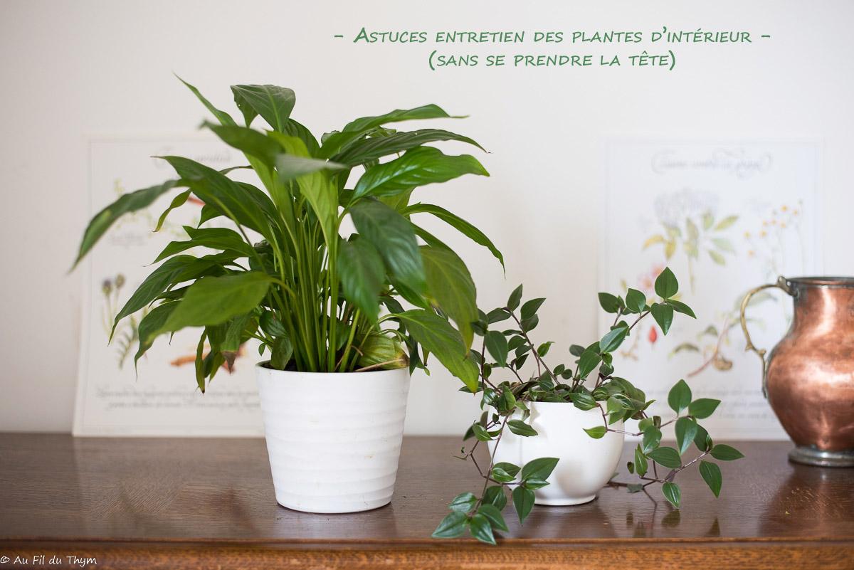 Astuces entretien plantes intérieur - trouver le bon emplacement