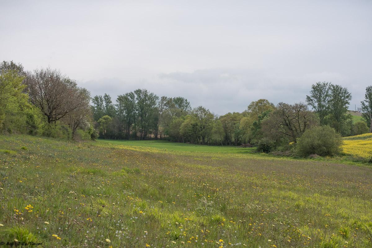 A la découverte des fleurs des champs (3)