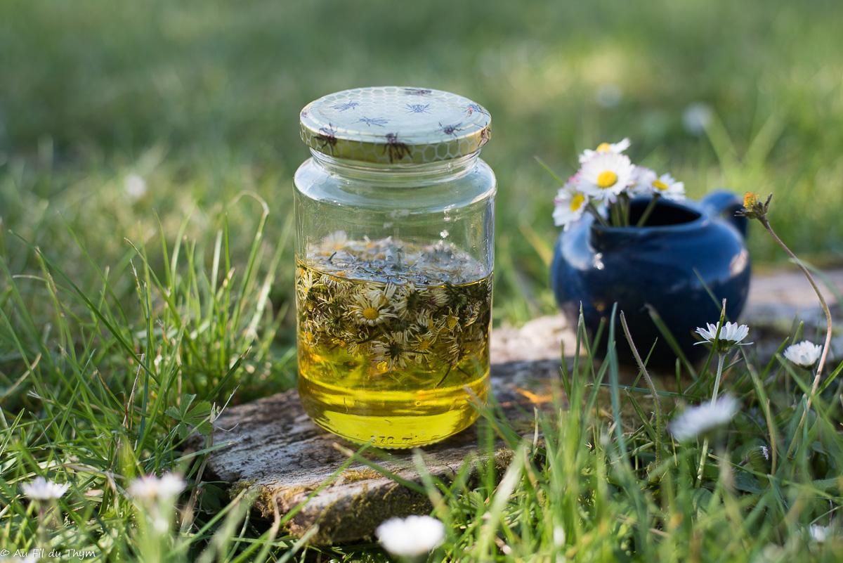 – DIY – Huile de Bellis (huile beauté raffermissante)