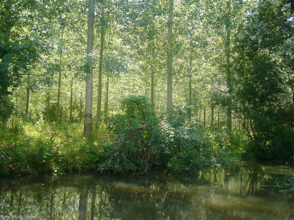destinations vacances été peu prisées : Le marais poitevin
