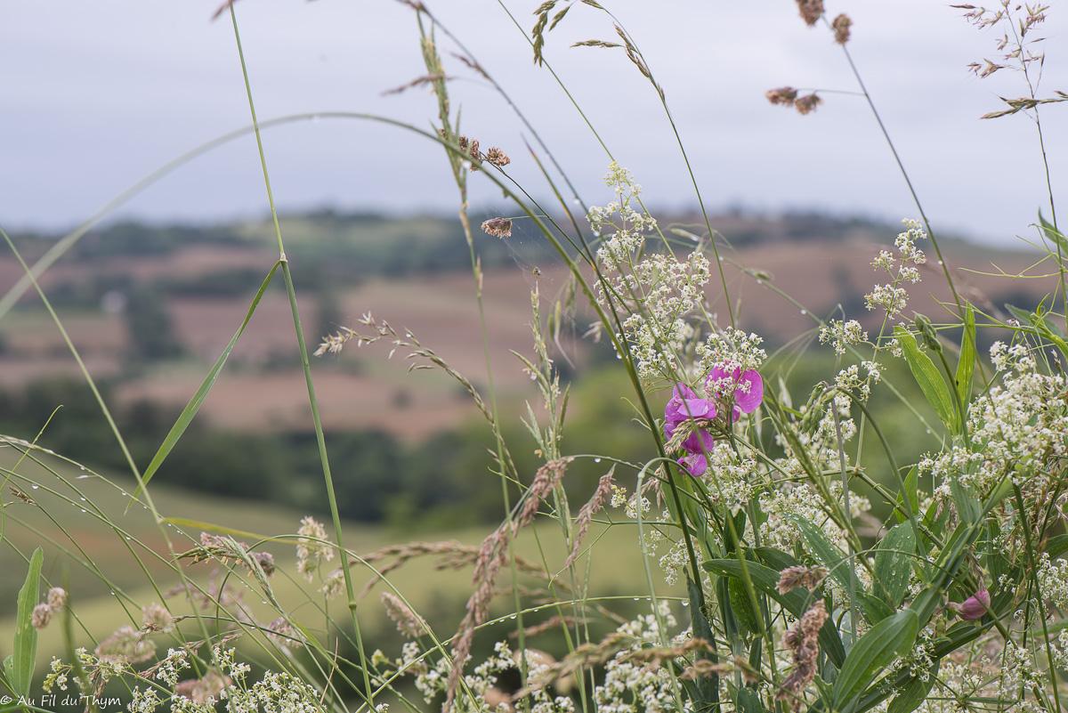 A la découverte des fleurs des champs (4)