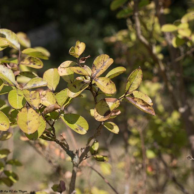 astuces bien arroser : détecter les signes de soif des plantes