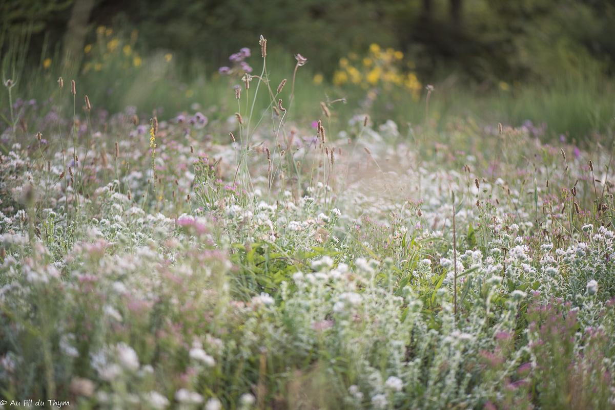 Balade botanique : Les Fleurs d'été (Juillet)