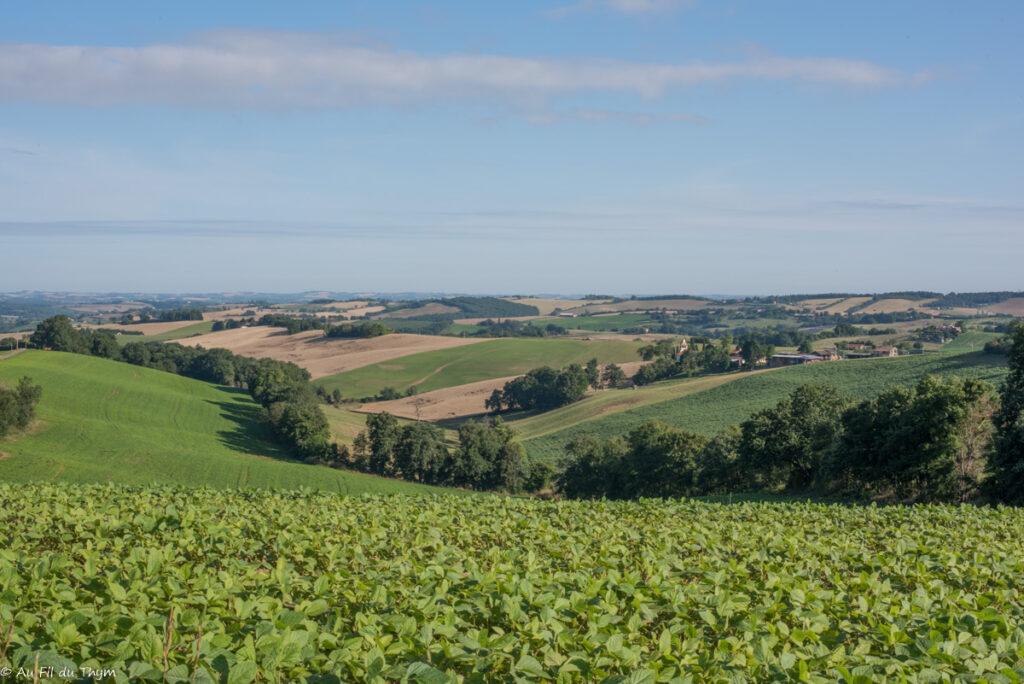 paysages savès : champs à perte de vue