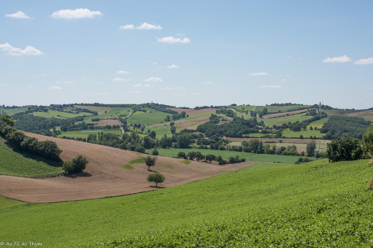 Paysages du Savès ( Gers / Haute Garonne)