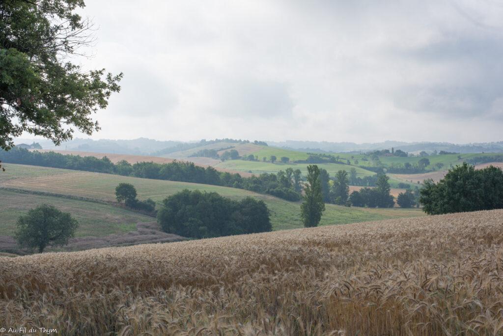 paysages savès : champs d'été