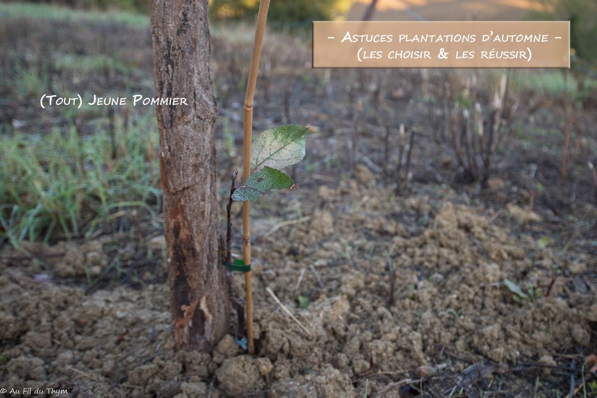 Astuces plantations automne arbre arbuste