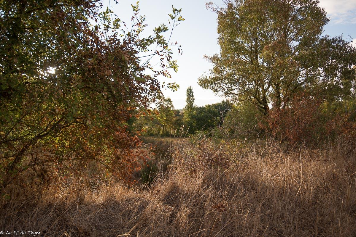 Balade botanique : Les haies champêtres en automne
