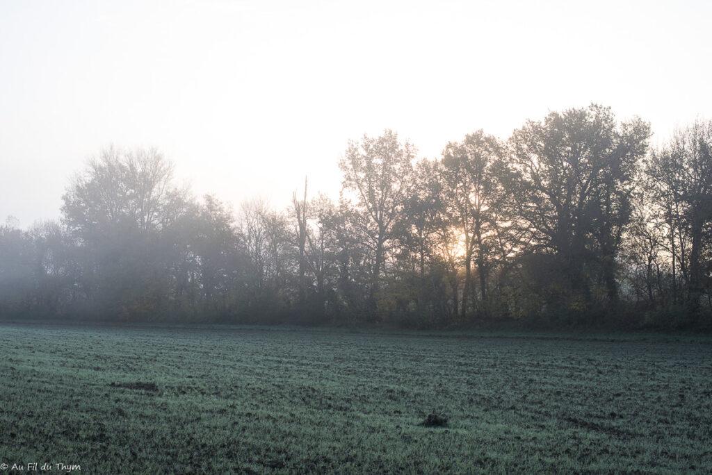 gestes écolos décembre 2020 : voir la nature prendre les teintes d'hiver