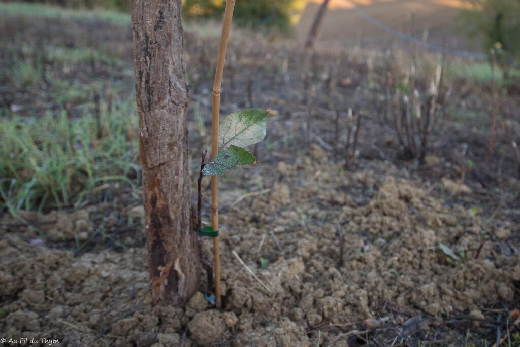 gestes écolos novembre 2020  - Planter des fruitiers