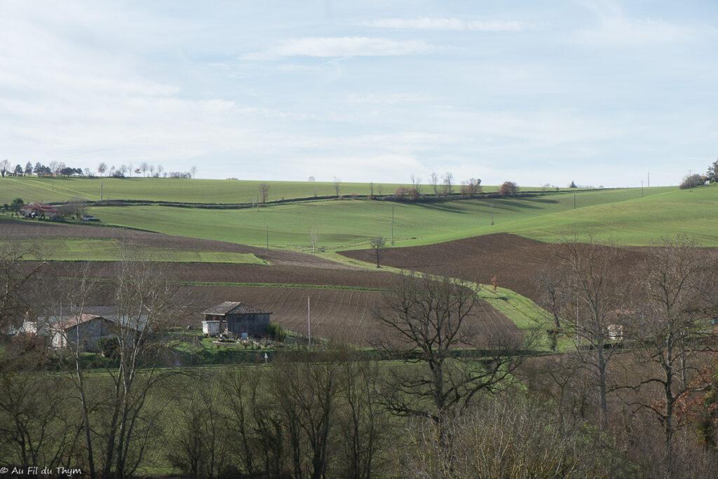 Noël dans le Gers : Couleurs douces des jeunes blés