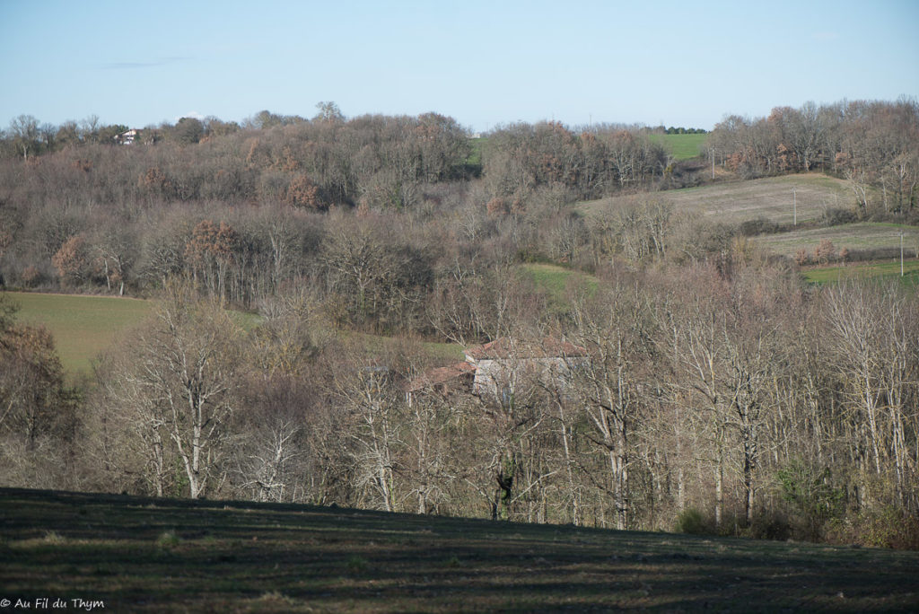 Forêt gers janvier 2020