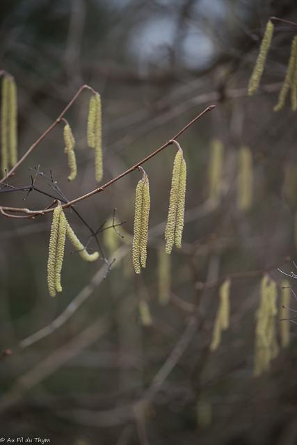 balade botanique février