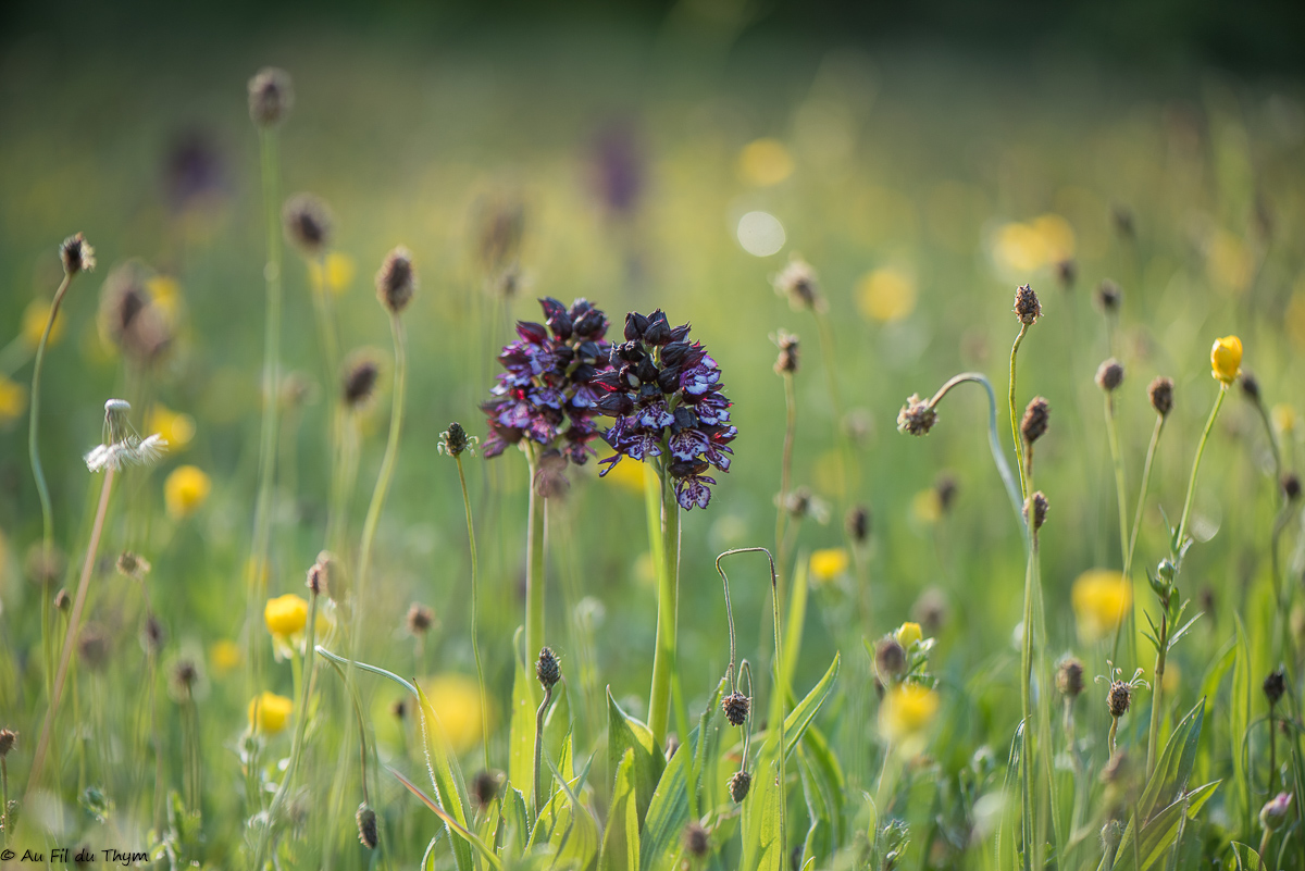 Balade botanique : Variations printanières (avril 2021)