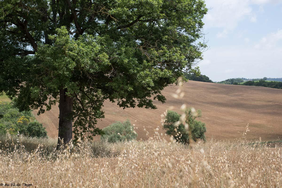 Balade Botanique juin 2021 - Dans les Champs